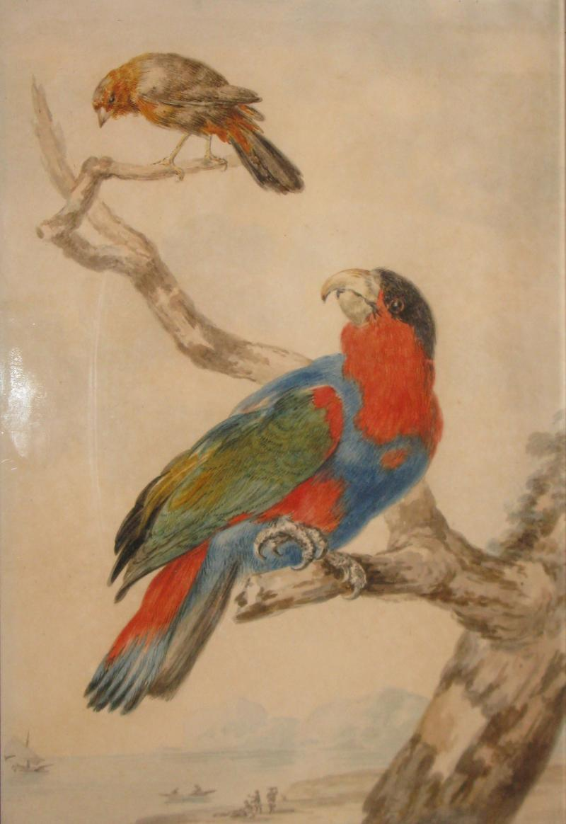 Abraham Meertens A parrot and another bird on a branch in a sea landscape