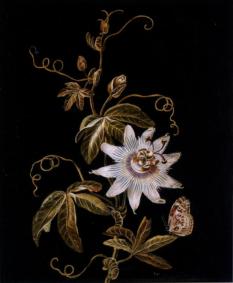 Adam Ludwig Wirsing Signed Passion Flower with a Butterfly