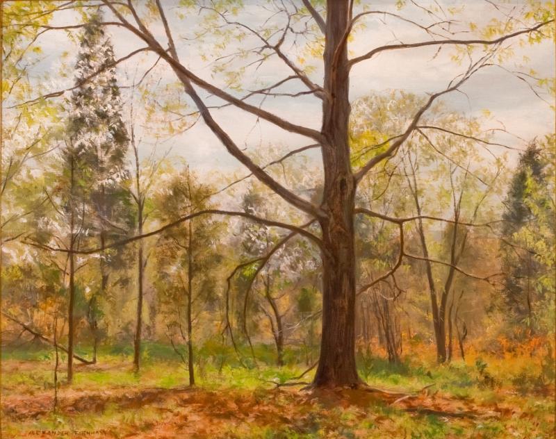 Alexander Farnham First Bloom