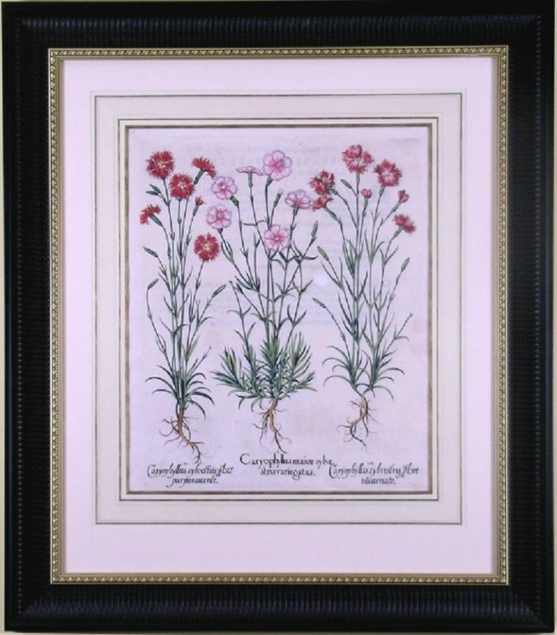 Basilius Besler Basilius Besler Caryophyllus Flore Carnations 1613
