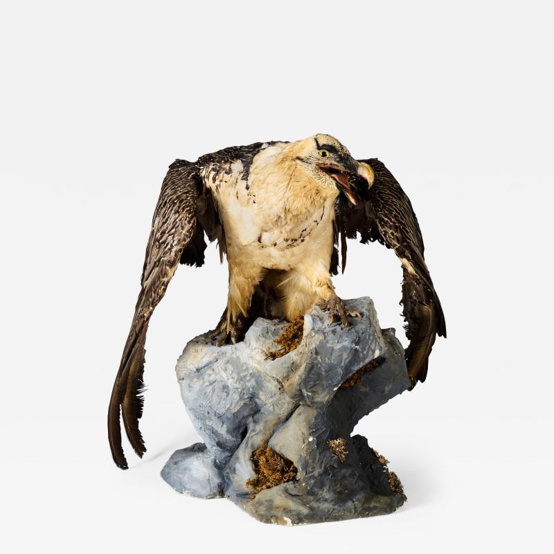 Bearded Vulture Gypaetus barbatus II A cites dd 09 03 2019
