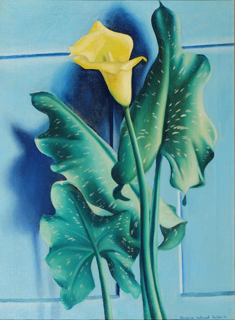 Clarence Holbrook Carter Yellow Calla Lily