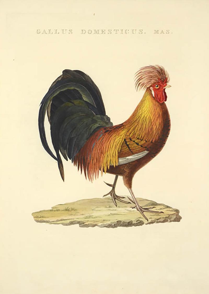 Cornelius Nozeman Pair of Chickens