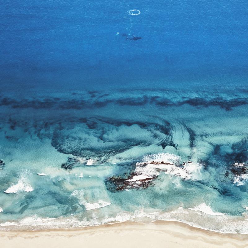 David Burdeny HumpbackWhales Kalbari Western Australia