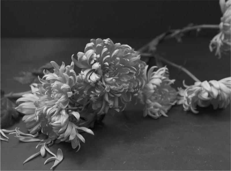 Don Freeman Black and White Flower Series