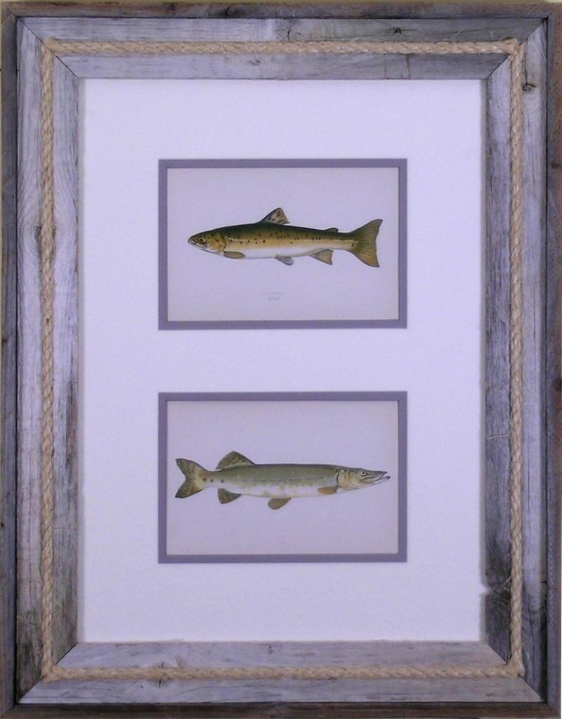 Edward Donovan Sea Trout Pike