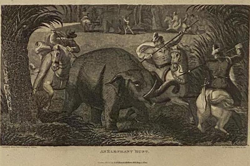 Elephant Capture Engraving England Circa 1820