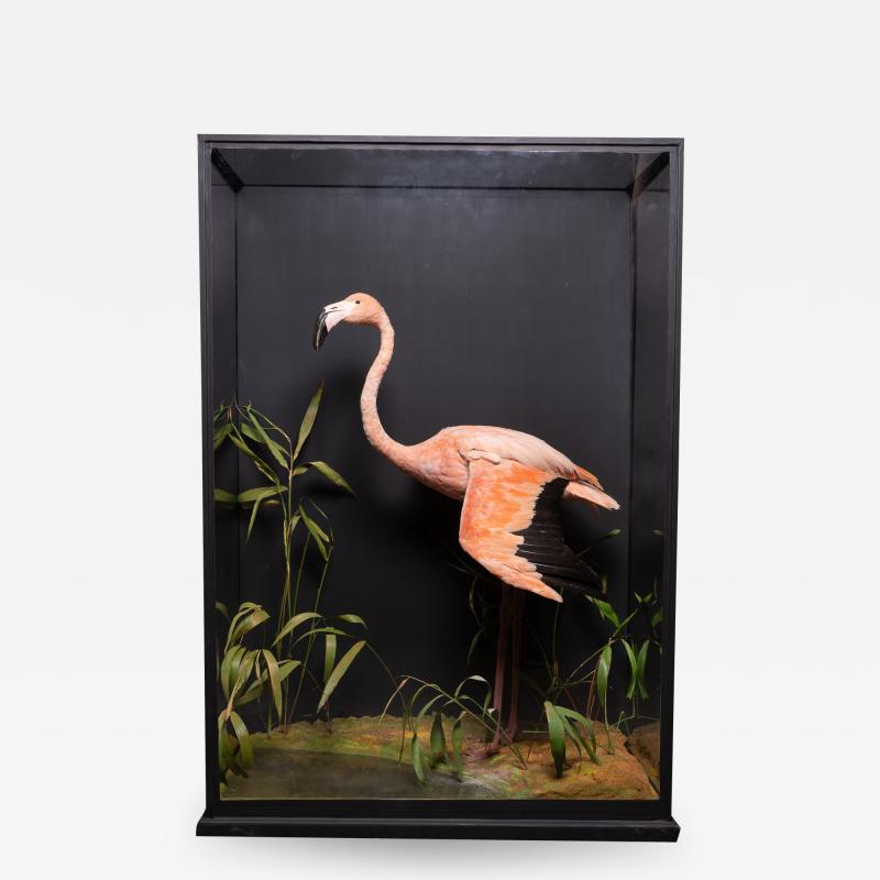 James Rowland Ward Rowland Ward glazed case with flamingo in a naturalistic setting
