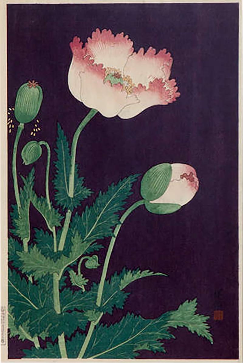 Japanese Showa Botanical Print of Poppies