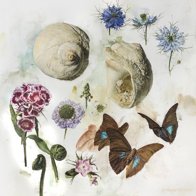 Jeffrey Ripple Shells Butterflies and Flowers