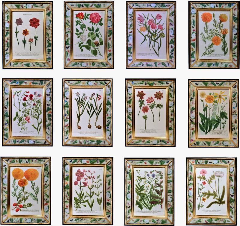 Johann Wilhelm Weinmann 18th Century Johann Weinmann Engravings of Flowers a set of Twelve