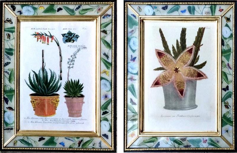 Johann Wilhelm Weinmann Johann Weinmann Pair of Botanical Engravings with Plants in Pots