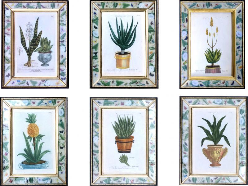 Johann Wilhelm Weinmann Johann Weinmann Set of Six Botanical Engravings with Plants in Pots