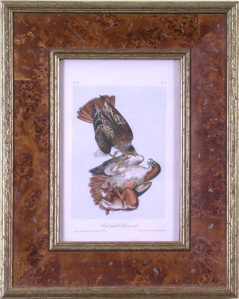 John James Audubon John James Audubon Audubon Red Tailed Buzzard 1839