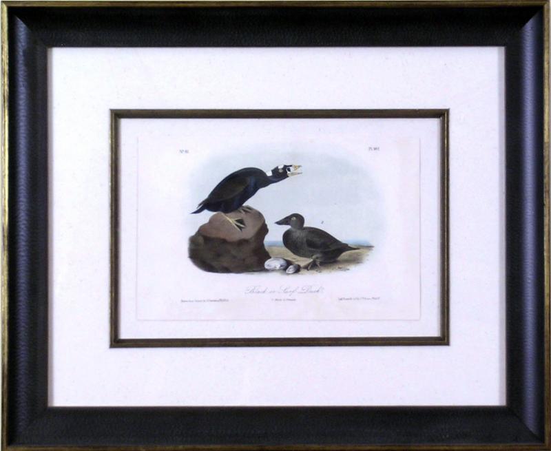 John James Audubon John James Audubon Black or Surf Duck 1856