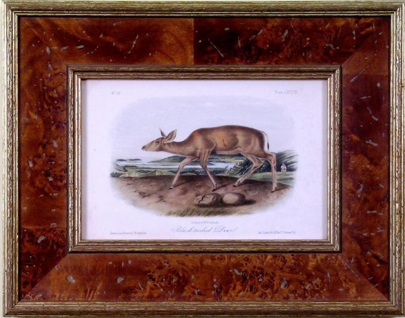 John James Audubon John James Audubon Black tailed Deer 1849