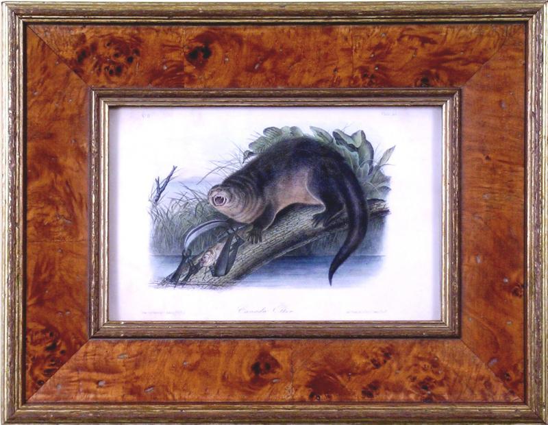 John James Audubon John James Audubon Canada Otter 1849