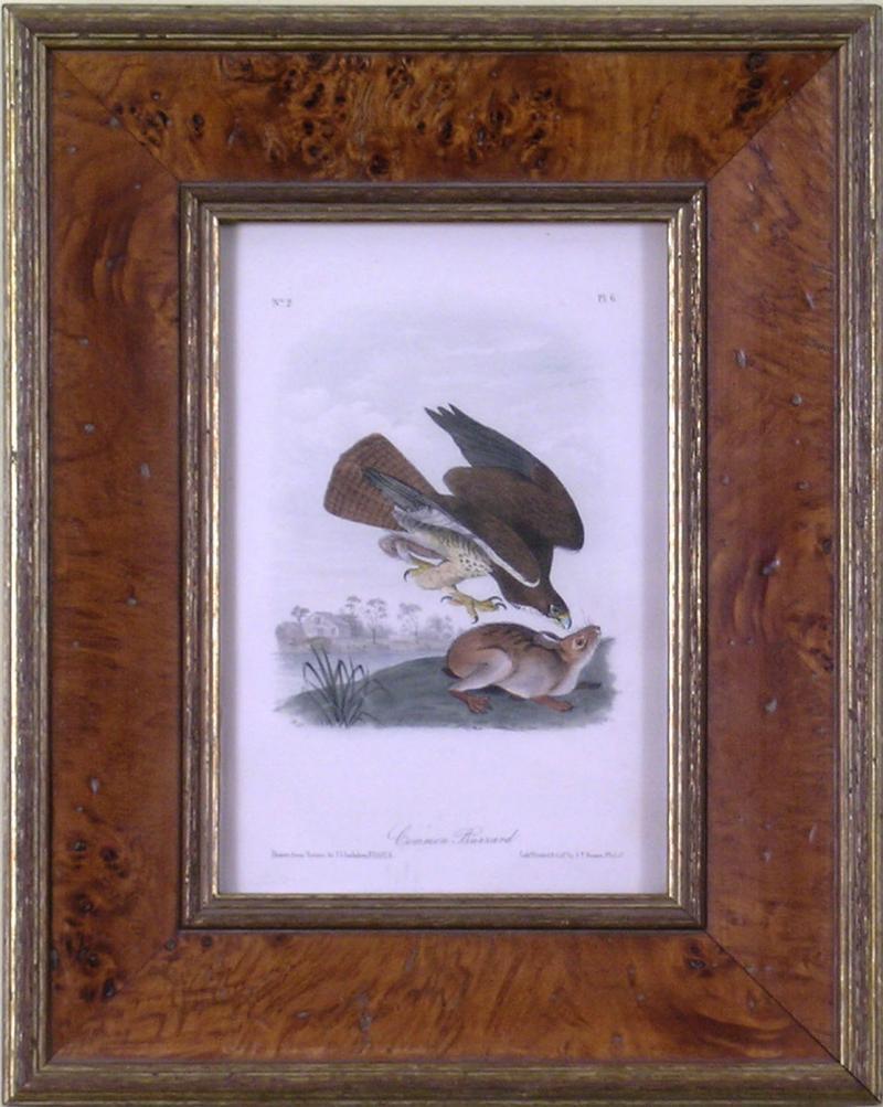John James Audubon John James Audubon Common Buzzard 1839