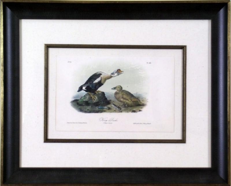 John James Audubon John James Audubon King Duck 1856