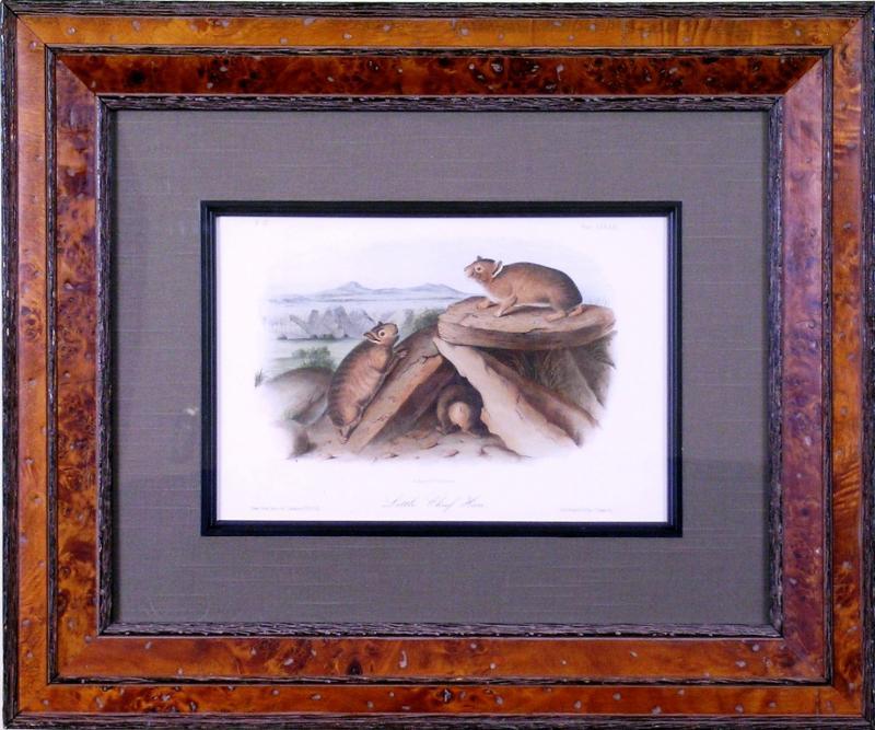 John James Audubon John James Audubon Little Chief Hare Rock Rabbit 1854