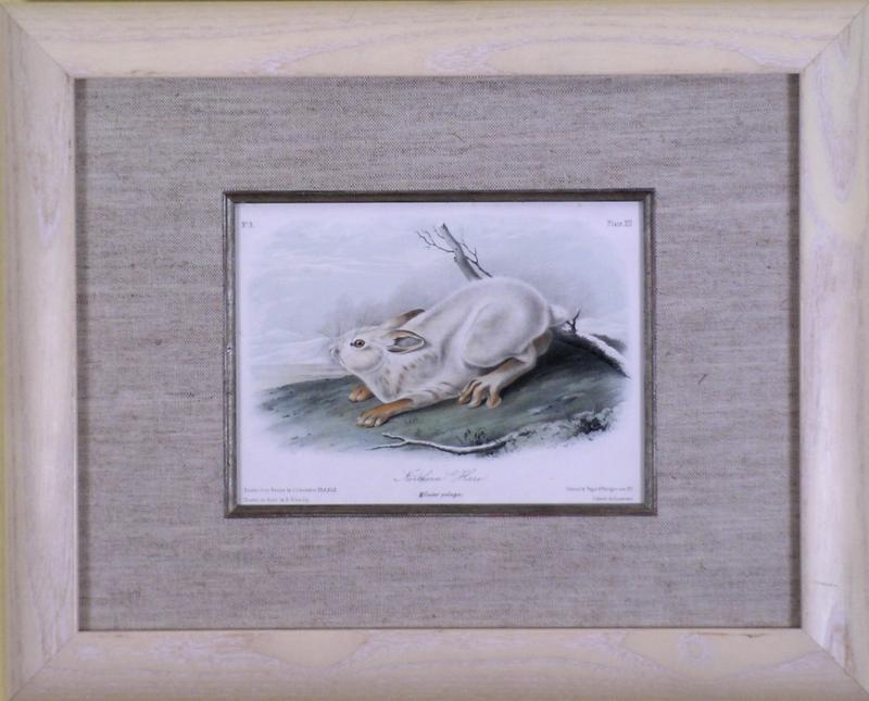 John James Audubon John James Audubon Northern Hare 1849