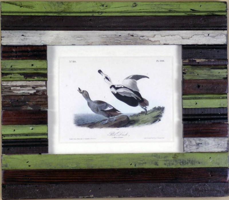 John James Audubon John James Audubon Pied Duck 1856