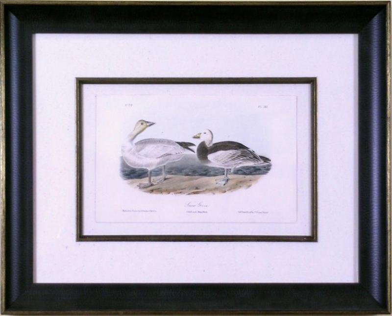 John James Audubon John James Audubon Snow Goose 1856