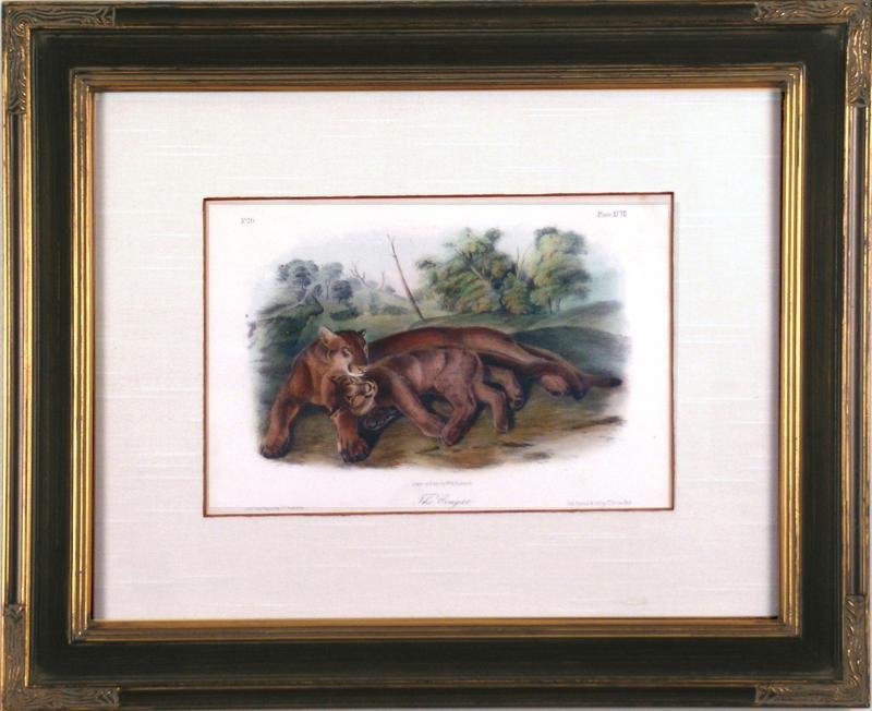 John James Audubon John James Audubon The Cougars 1839