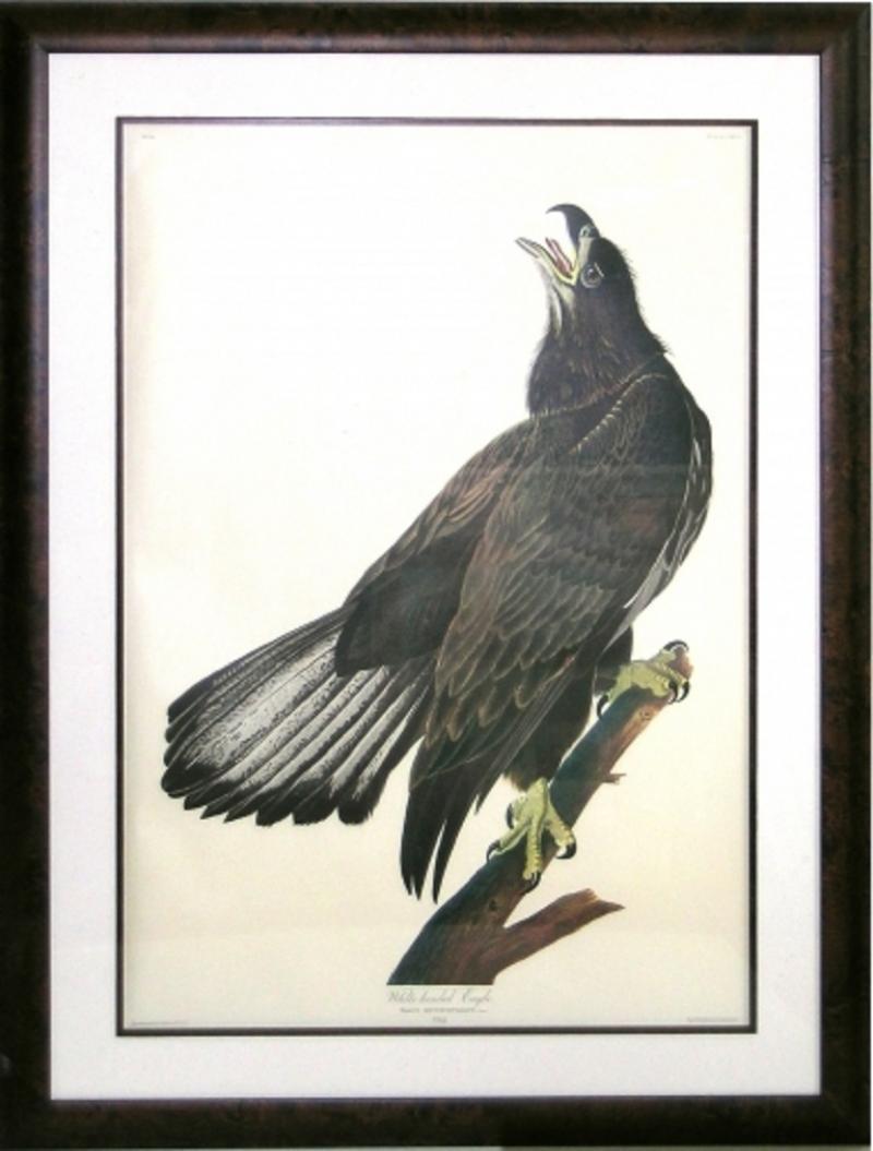 John James Audubon John James Audubon White Headed Eagle Young Bald Eagle 1971 73