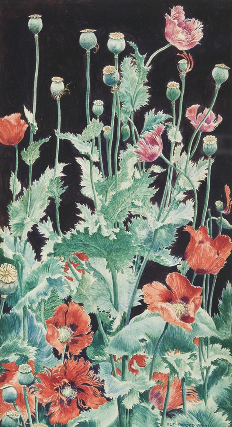 John Rutherford Boyd Shirley Poppies