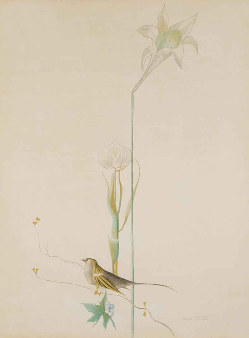 Joseph Stella Lily and Bird