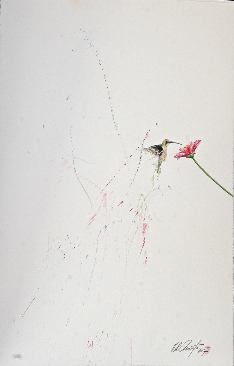 Keith Carrington Hummingbird XIII Ink on Paper