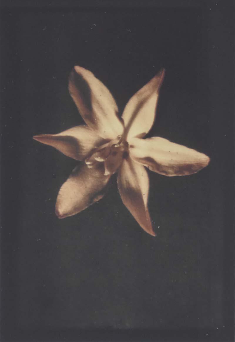 Leendert Blok 1920s botanic autochrome by Dutch photographer Leendert Blok