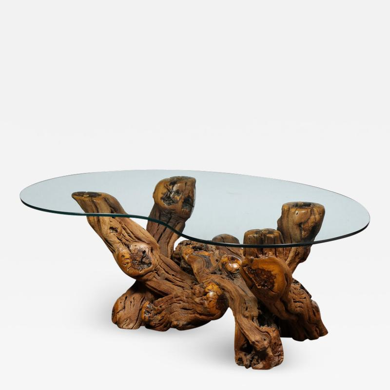 Mid Century Modern Burled Driftwood Cocktail Table with Amorphic Glass Top