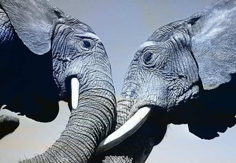 Mitchell Funk Elephants in Mexico Life Magazine