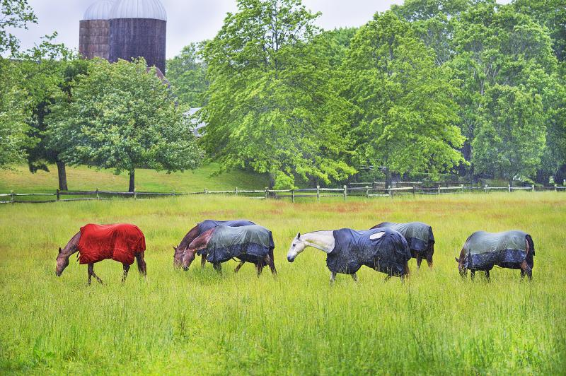 Mitchell Funk Horses in the Rain East Hampton Neutral palette