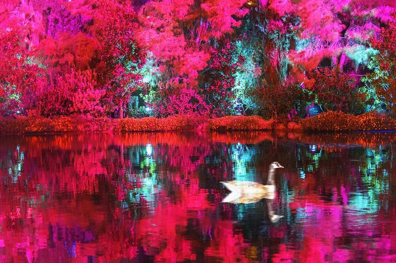 Mitchell Funk Marbled Duck on a Dreamy Vermillion Pond