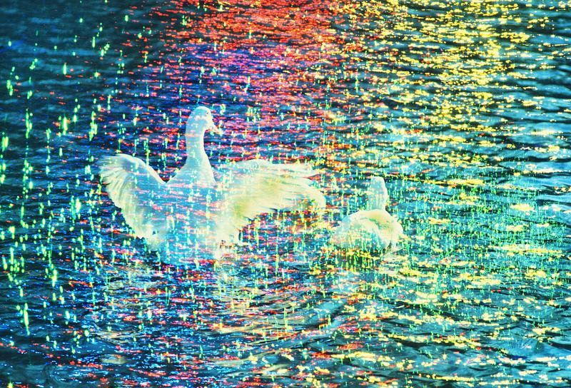 Mitchell Funk White Ducks in Prism of Color