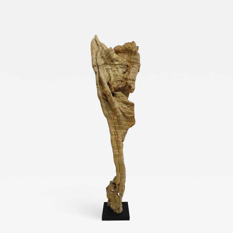 Natural Teak Wood Root Sculpture