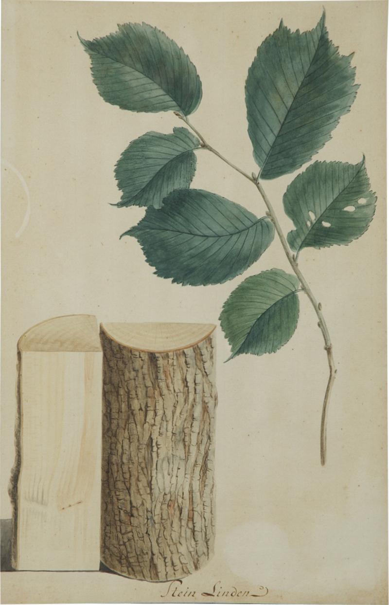 Pair of Botanical Watercolors by Ludwig Pfleger