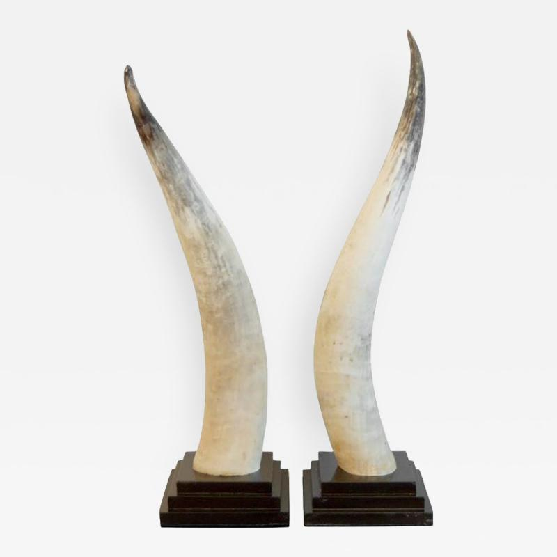 Pair of Longhorns on Black Ebonized Bases