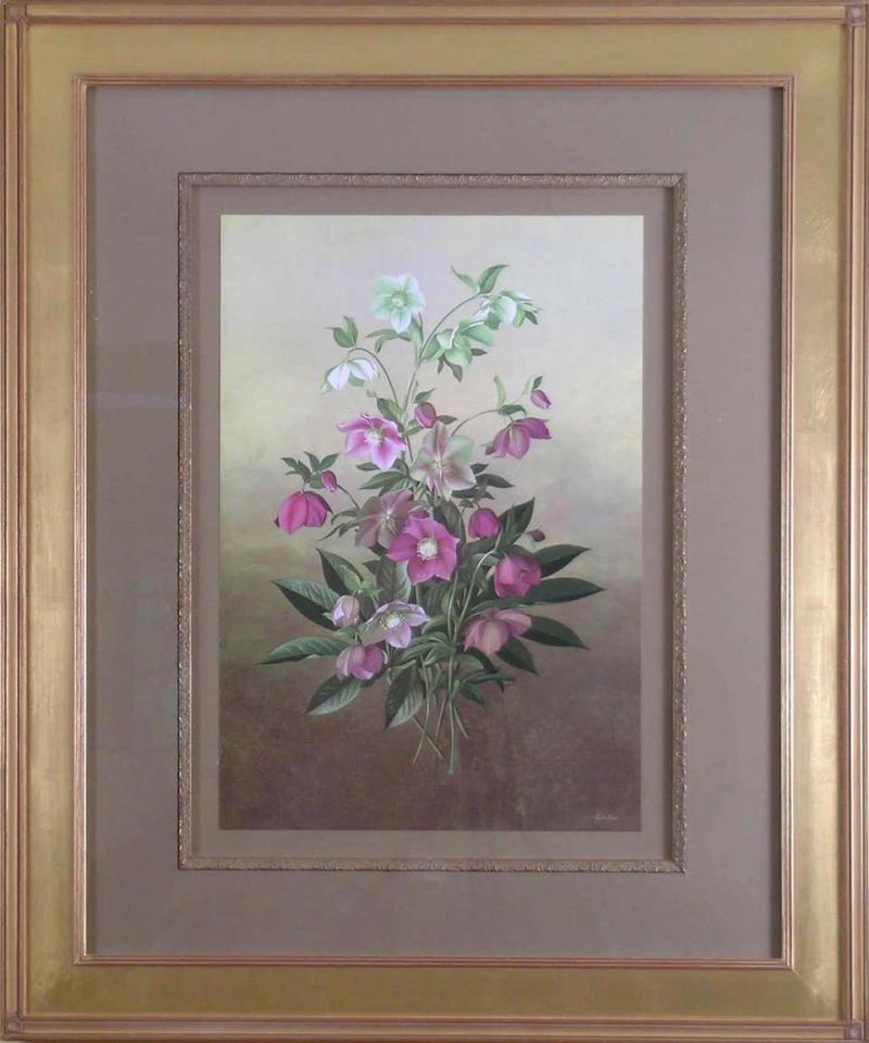 Paul Jones Paul Jones b 1921 Helleborus Orientalis Lenten Rose 1976