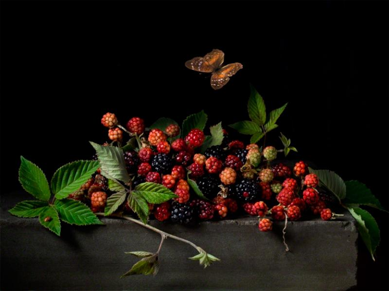 Paulette Tavormina Blackberries and Butterfly After AC from the series Natura Morta 2015