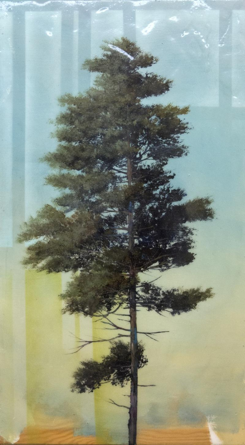 Peter Hoffer Pine Tree with Shadow