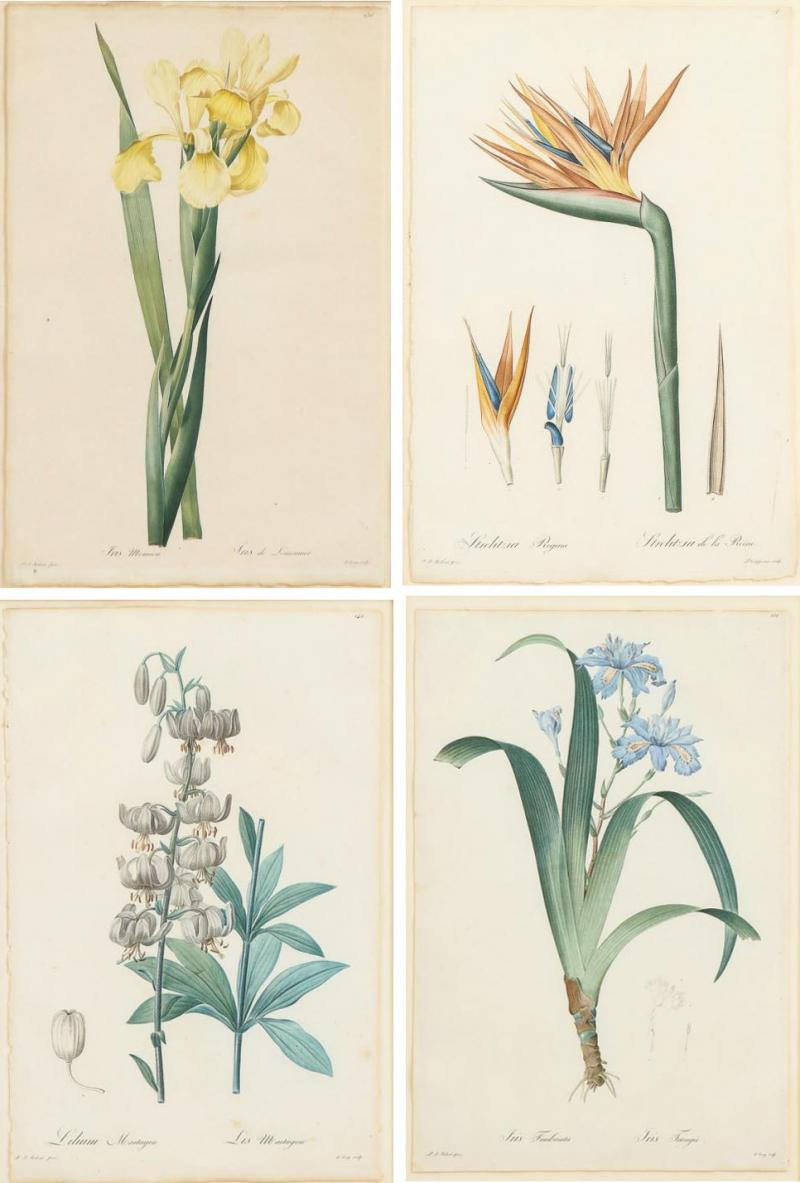 Pierre Joseph Redoute Set of Four Botanical Prints by Pierre Joseph Redoute