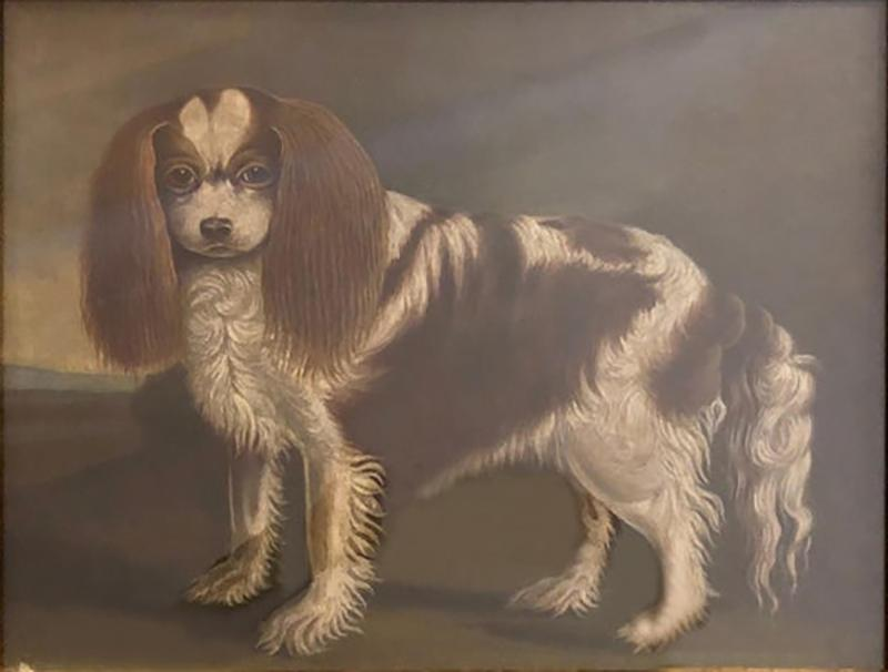 Portrait of a Cavalier King Charles Spaniel Oil on Canvas 20th Century