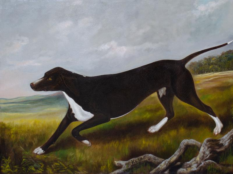 Portrait of the Sporting hound Ruth