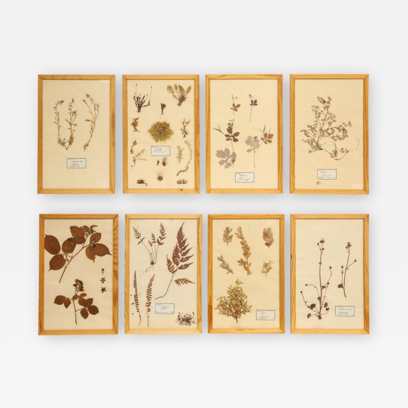 Pressed Botanicals Specimens