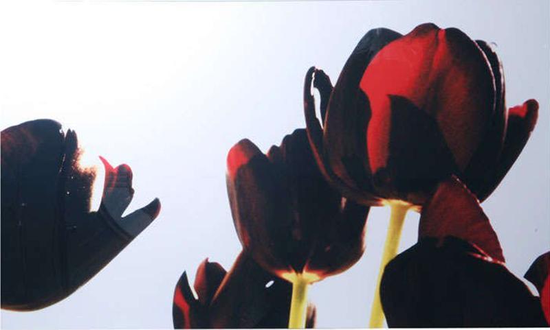 Renato Freitas Renato Freitas Black Tulips Original Photography