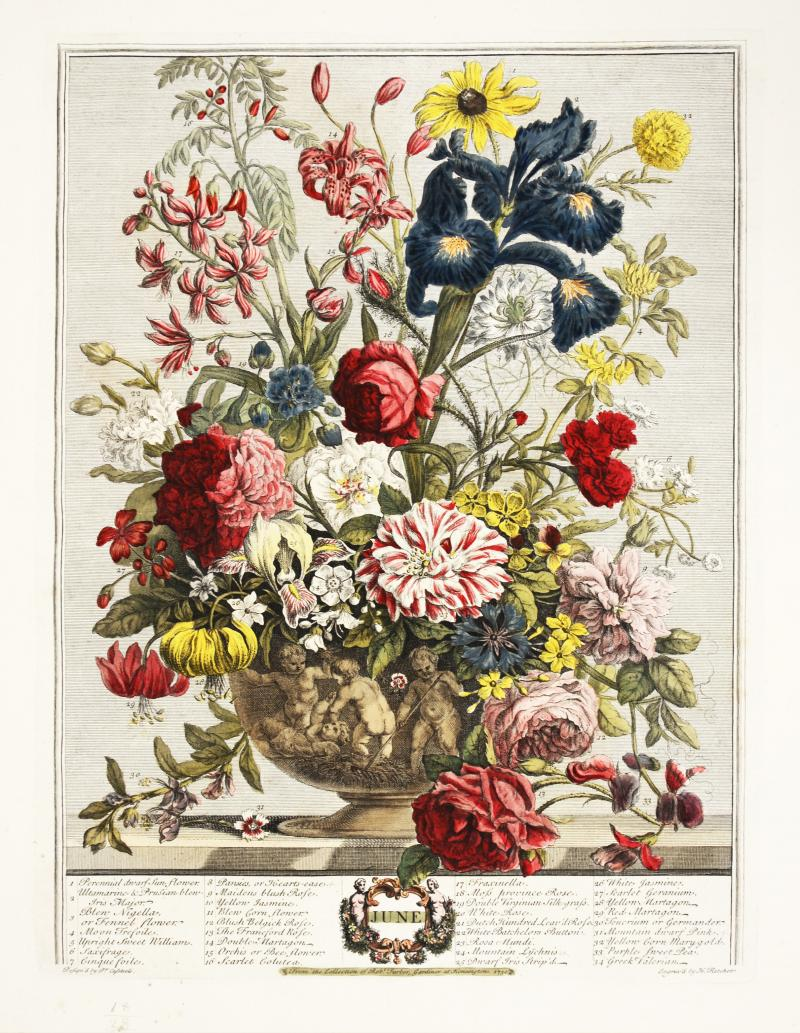Robert Furber Twelve Months of Flowers